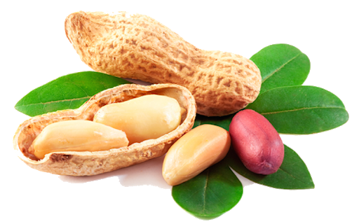 GROUNDNUT PNG